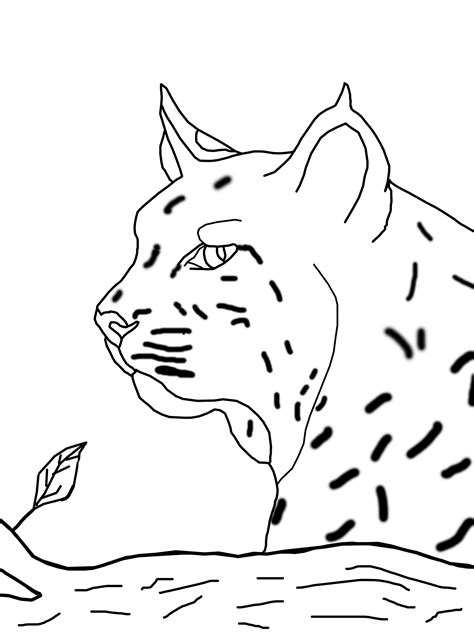 Exclusive coloring pages of excellent quality based on the popular cartoon from netflix. Bobcat coloring pages to download and print for free