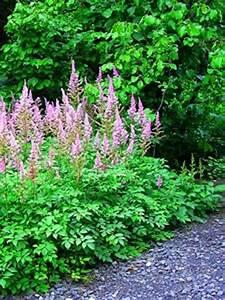 Plantes D Ombre Extérieur : plantes pour l 39 ombre tous nos sujets ~ Melissatoandfro.com Idées de Décoration