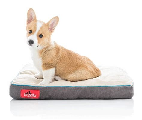 top  chew proof dog beds  reviews topbestsellerproduct