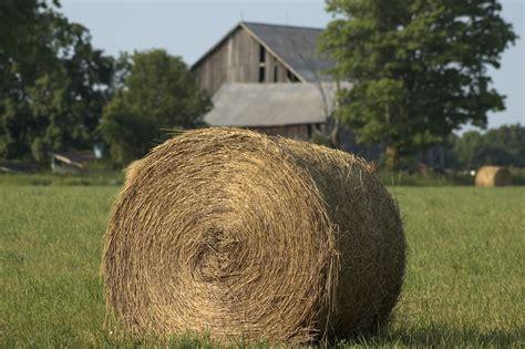 hay horses grass hays type legume bale vs round