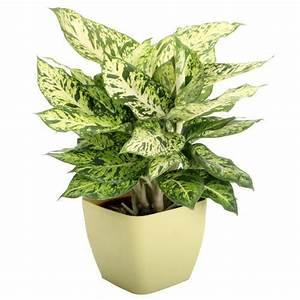 Decorative, Plants
