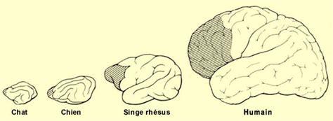 le cerveau  tous les niveaux