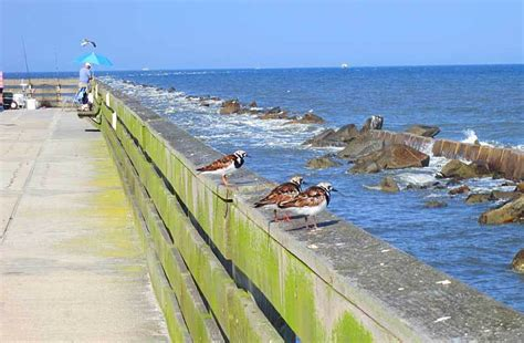fort clinch park state amelia island pier fishing florida camping worth drive explore