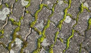Insecticide Naturel Pour La Maison : eliminer la mousse sur une terrasse c t maison ~ Nature-et-papiers.com Idées de Décoration