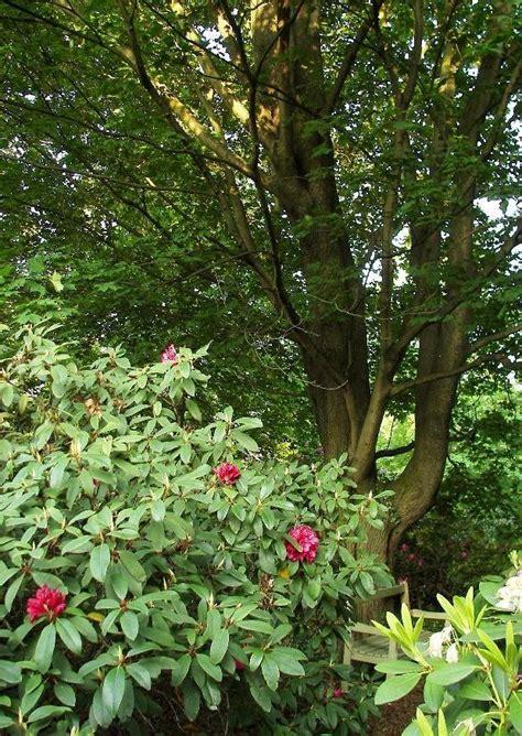 Braune Pilze Im Garten Bilder by Braune Pilze Im Garten Pilze Im Rasen Egarden Pilze Im