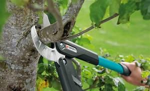 Wann Apfelbaum Pflanzen : apfelbaum schneiden anleitung herbst apfelbaum schneiden ~ Lizthompson.info Haus und Dekorationen