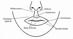 Current Concepts In Lip Augmentation