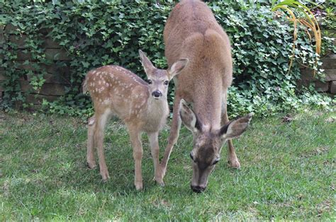 What Is Chronic Wasting Disease? Could Mysterious 'zombie