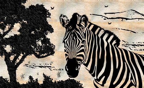 zebra drawing wallpaper  background image