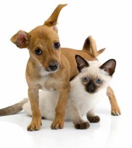 why should you get dog walking and cat sitting service With dog and cat sitting services