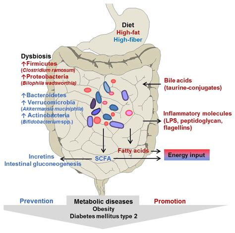 nutrients  full text  intestinal microbiota