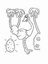Ostrich Coloring Ostriches Printable Egg sketch template