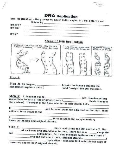 Dna translation is the term used to describe the process of protein synthesis by ribosomes in the cytoplasm or the genetic information in dna is used as a basis to create messenger rna (mrna) by transcription. Transcription and Translation Practice Worksheet Biology Corner Dna Coloring Transcription and ...