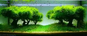 Aquarium Dekorieren Ideen : aquarium designs zum integrieren in der wohnung ~ Bigdaddyawards.com Haus und Dekorationen