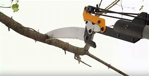 How To Use A Pole Saw  Easy Guide For Beginners