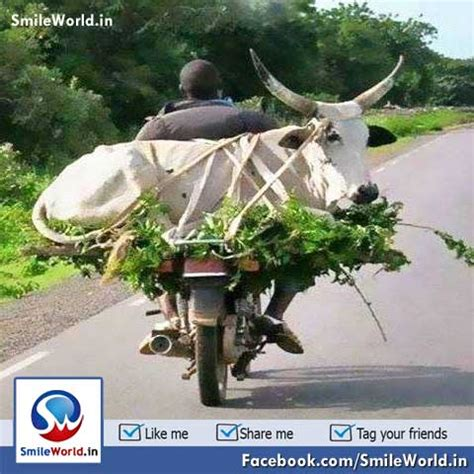 indian bike rider transportation funny  animal pictures