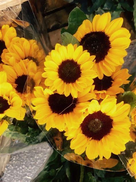 sunflower aesthetic tumblr