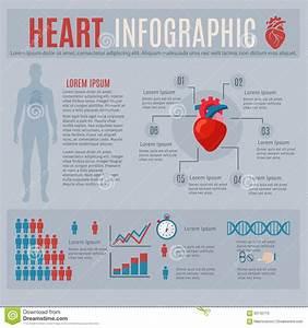 Human Heart Infographics Stock Vector
