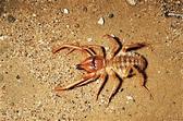 Absurd Creature of the Week: This Ferocious Arachnid Is ...