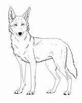 Coyote Coloring Drawing Lineart Cartoon Paint Friendly Printable Face Drawings Canis Ferox Version Head Wolf Template Deviantart Line Howling Sketches sketch template