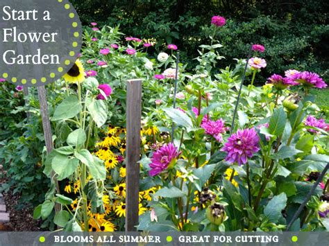 best flowers for all summer color lots of blooms great