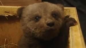 Boris the cute baby bear - YouTube