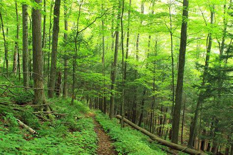 picture wood leaf nature landscape tree forest