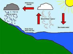Show an easy diagram of water cycle and write the ...