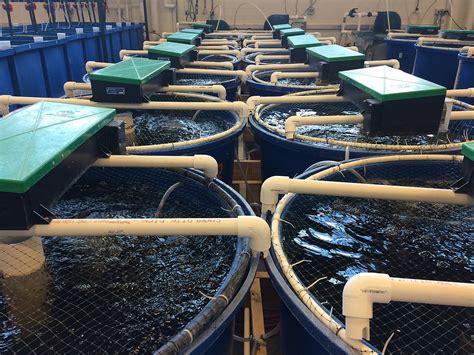 indoor fish farming equipment