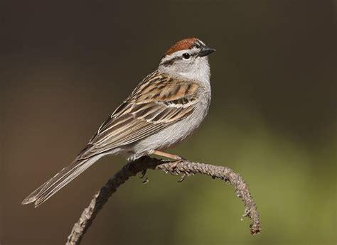 images  missouri birds   backyard