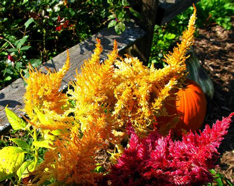 what to plant in the fall fall is a great time to buy and plant plants shrubs and trees the garden lady
