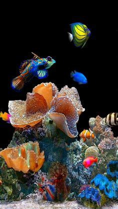 Living Marine Aquarium 2 Animated Wallpaper - wallpaper of waterfalls moving living marine aquarium 2