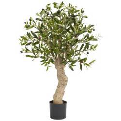 2 5 foot olive tree potted 5331 nearly