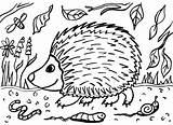 Hedgehog Colouring Sheet Mash Colour Ie sketch template