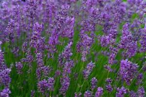 Pflanzen Gegen Spinnen : spinnen vertreiben bek mpfen hausmittel gegen spinnen ~ Lizthompson.info Haus und Dekorationen