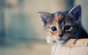 Cat Photos - Cute Funny Cat Wallpapers & Image Download 2019