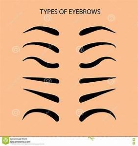 5 Basic Eyebrow Shapes  Vector Illustration