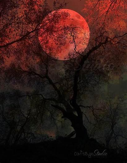 Moon Blood Surreal Tree Forest Creepy Halloween