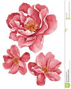 Illustration Watercolor Flowers