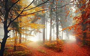 Nature, Forest, Trees, Fall, Mist, Leaves, Path, Wallpaper
