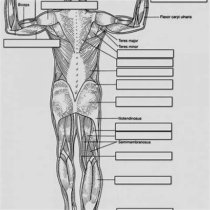 Anatomy Physiology Coloring Workbook Pages Answers Printable