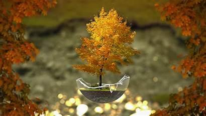 Bonsai Tree Desktop Autumn Trees Wallpapers Glass