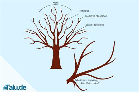 kirschbaum schneiden vorher nachher s 252 223 kirsche schneiden anleitung und tipps talu de