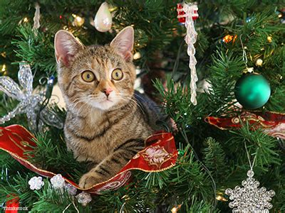xmas tree made out of cats help how do i keep my cat out of the tree