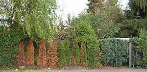 Was Kann Man In Ein Gewächshaus Pflanzen : hecke kahl oder abgestorben was kann man tun ~ Lizthompson.info Haus und Dekorationen