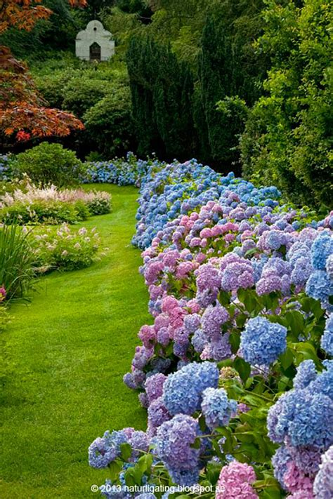 hydrangea border garden 17 dreamy hydrangea gardens that are giving us major inspiration southern living
