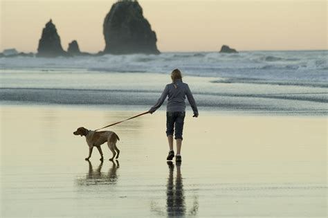 pet friendly rci resorts timeshare hotels  accept