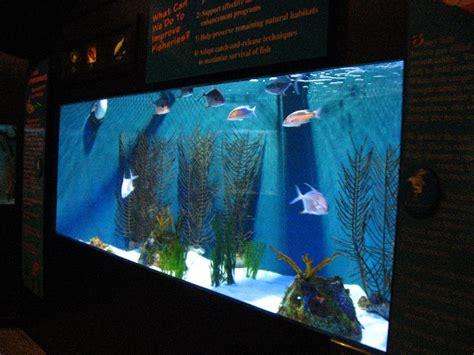 Mote-Marine-Aquarium-Sarasota-FL-006