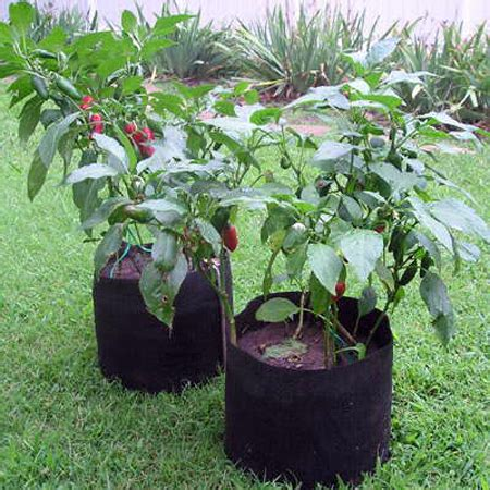 Five Great Container Choices For Any Garden