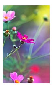 [49+] Spring Flower Wallpaper HD 3D on WallpaperSafari